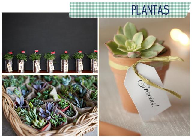 regalos invitados boda plantas